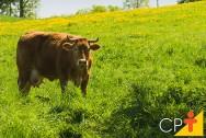 El pasto para vacas y toros, es algo más que una fuente de alimento.  Es el lugar en el que viven