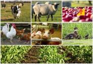 É possível tornar lucrativa uma pequena propriedade rural?