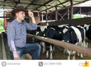 Gado de leite - saiba mais sobre o melhoramento genético