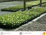 Como fazer mudas com sobras de jardinagem