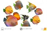 Piscicultura ornamental - investimento mais que lucrativo em Minas Gerais