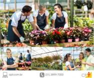 Montar um viveiro e produzir plantas ornamentais ficou mais fácil