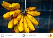 Cultivo de banana - principais doen�as