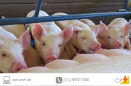 Suinocultura - a mortalidade dos leit�es