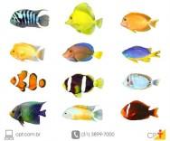 O mercado de peixes ornamentais no Brasil