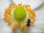Vantagens da criação de abelhas sem ferrão