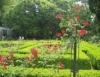Aprenda Fácil Editora: Fatores que influenciam a produção de rosas