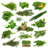 Benefícios da hortelã para a saúde