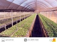 Mudas de caf�: da localiza��o do viveiro � semeadura
