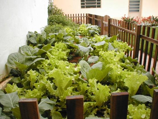 mini jardim curitiba:Salsa Com Pimenta: Horta para Pequenos Espaços