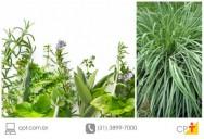 7 plantas que afastam insetos