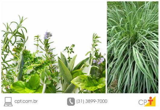 Plantas Medicinais que repelem insetos