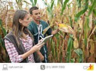 Produ��o de milho safrinha alcan�a 130% em 2015