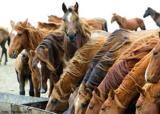 caballos siendo alimentados