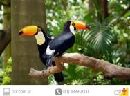 Projeto Asas - trabalho ambiental que devolve � natureza animais apreendidos