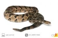 Estrabismo � combatido com veneno de cobra