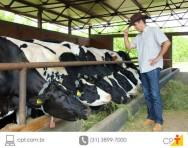 Gado leiteiro morre devido à tripanossomose