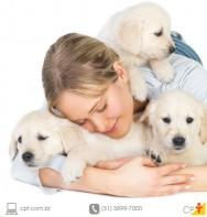 Seu cachorro destrói tudo? Então, aprenda a educá-lo!