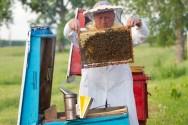 Comercialização de mel em 2015 é favorecida com a alta do dólar