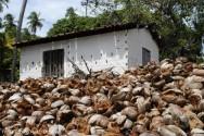 Como transformar restos de casca de coco em composto orgânico
