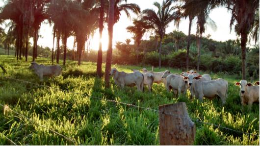 Agropecuaria sustentavel