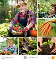 Setor agropecuário predomina em mais de 50% das cidades do país