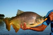 Peixes redondos: a nova opção de consumo e produção nacional