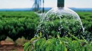 Economizar �gua na agricultura � poss�vel? Sim! Saiba como