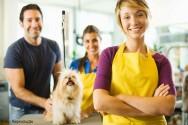 Banho e tosa de cães e gatos garantem o bem-estar animal