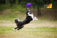 Hotel para cães e gatos: saiba mais sobre este empreendimento