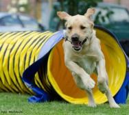 Inteligência canina: é possível avaliar o grau de aprendizagem?