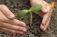 Silvicultura - uma grande promessa brasileira