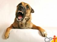 Por que os cães latem? Como corrigir os excessos?