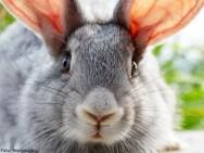 Como criar coelhos - 7 dicas de sucesso