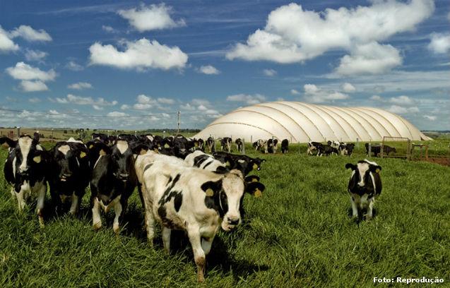 Biogás e biofertilizantes: de que são constituídos e como utilizá-los - Artigos CPT