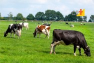 Produção de leite em pasto: controle sanitário do rebanho