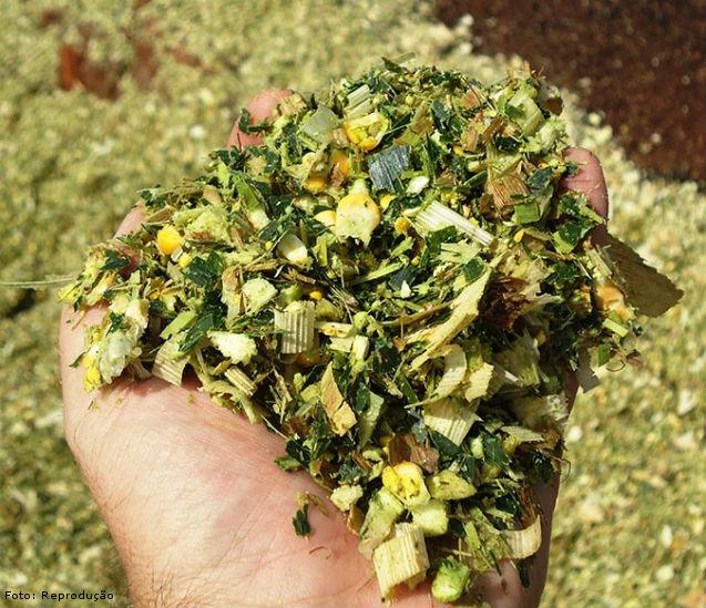 Eficiência na silagem de milho - Artigos Cursos CPT