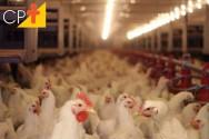 UE importa mais frango, peru e cana-de-açúcar do Brasil