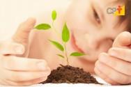 Plantar uma árvore para deter a derrubada de milhares
