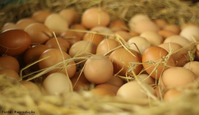 Saiba mais sobre o ovo - Artigos Cursos CPT