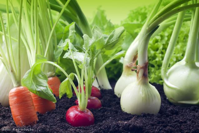 Cultivo de orgânicos: rotação de cultura - Artigos Cursos CPT