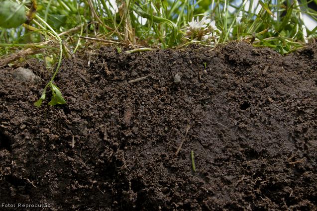 Cultivo de orgânicos: características do solo - Artigos Cursos CPT