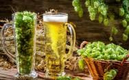 Importância do lúpulo na fabricação de cerveja artesanal