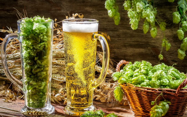 Importância do lúpulo na fabricação de cerveja artesanal   Artigos Cursos CPT