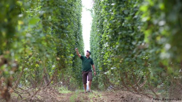 Importância do lúpulo na fabricação de cerveja artesanal: características    Artigos Cursos CPT