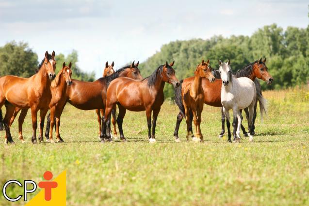 Como deve ser a alimentação dos cavalos?   Artigos Cursos CPT