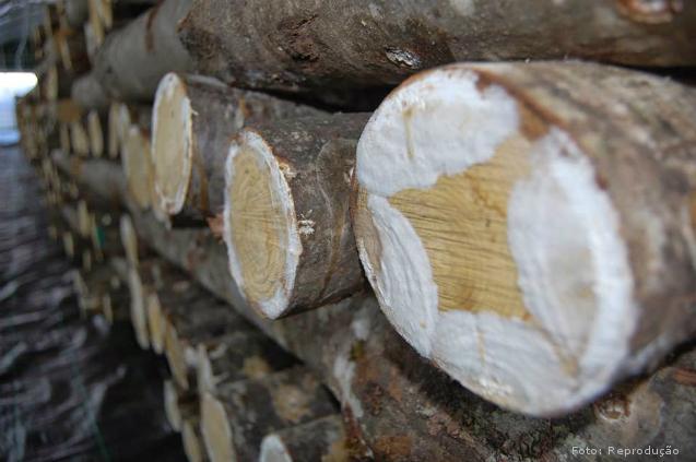 O que faz a madeira de eucalipto apodrecer?   Artigos Cursos CPT