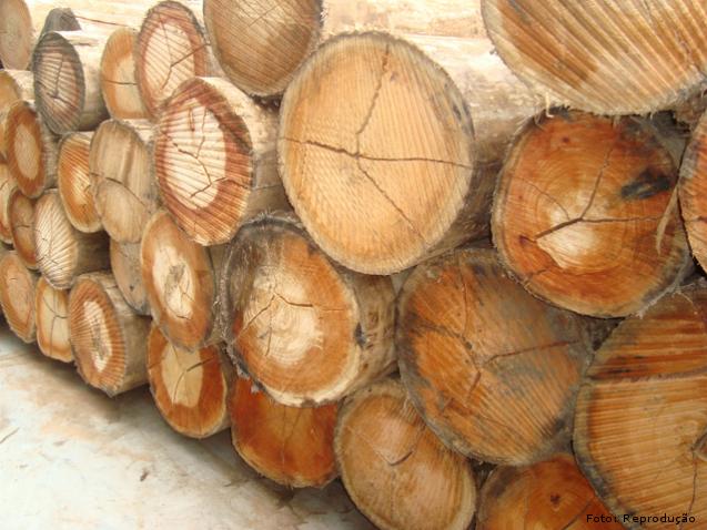 Tensões de crescimento em madeira de eucalipto: prováveis motivos    Artigos Cursos CPT
