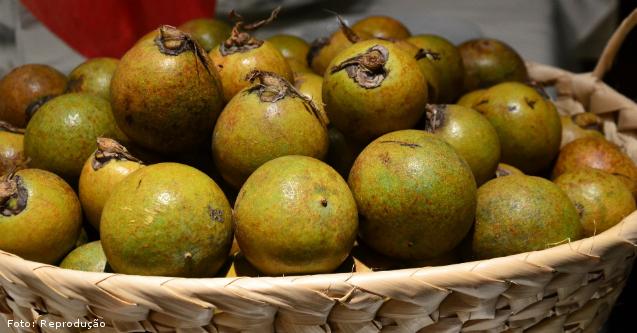 Coco Macaúba - como é feita a despolpa dos frutos?   Artigos Cursos CPT