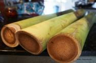 Produção de Palmito - da colheita da palmeira real ao mercado